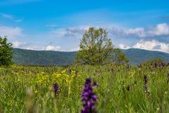 里拉山脉山在春天 库存照片