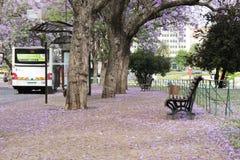 里斯本葡萄牙 免版税库存图片