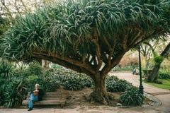 里斯本,葡萄牙01可以2018年:孤独的人在庭院里在树下 孤独的人等待他的妇女并且等待相识 库存照片