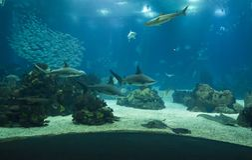 里斯本水族馆主油箱 免版税库存图片