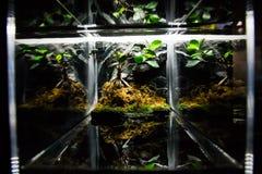 里斯本Oceanarium -与小树的坦克 免版税库存图片