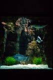 里斯本Oceanarium -中心坦克,许多看法之一 图库摄影