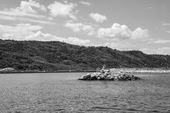里米尼港口  免版税库存图片