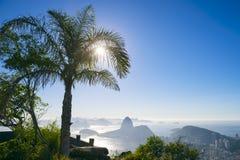 里约热内卢巴西日出棕榈树糖面包山 库存照片