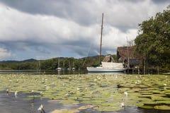 里约达尔西小船和植被,危地马拉 库存图片