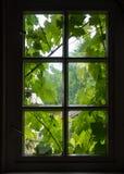 里面一间老农舍的墙壁和窗口用葡萄离开 免版税库存照片