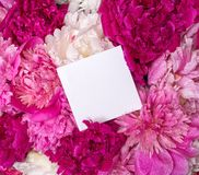 里面牡丹和笔记花束  春天紫罗兰花 免版税库存照片