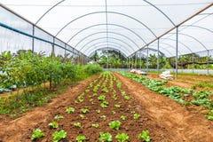 里面看法温室 安格斯 卡宾达市 免版税图库摄影