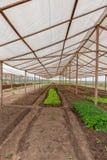 里面看法温室 安格斯 卡宾达市 图库摄影