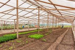 里面看法温室 安格斯 卡宾达市 库存图片