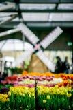 里面郁金香庭院与从荷兰的风车 免版税库存图片