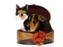 里面配件箱棕色杂色猫礼品 库存照片