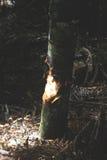 里面结构树 免版税库存照片