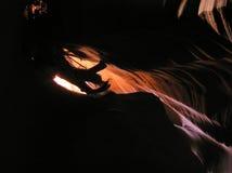 里面4只羚羊峡谷 库存图片