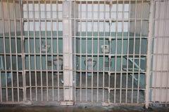 里面alcatraz 免版税图库摄影