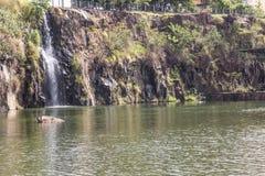 里贝朗普雷图市公园,亦称博士 雷斯卡洛斯Raya 免版税库存图片