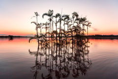 重创的拉古纳- Cuyabeno野生生物储备 美洲红树树和pa 库存图片