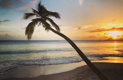 重创的Anse des Slaines在马提尼克岛 免版税图库摄影