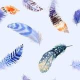 重复样式的羽毛 与无缝的水彩背景 库存图片