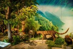 重庆三峡博物馆历史展示三峡博物馆`壮观的三峡` 免版税库存图片