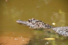 重庆鳄鱼鳄鱼水池中心 免版税图库摄影