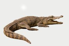 重庆鳄鱼鳄鱼水池中心 库存图片