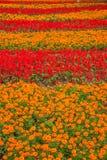 重庆巴南充分开花世界庭院在盛开的花 库存图片