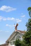 重庆巴南在小庭院别墅世界开花  库存照片