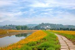 重庆巴南开花世界庭院在盛开的湖边花 库存照片