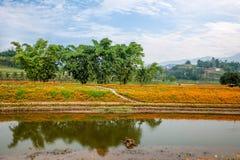 重庆巴南开花世界庭院在盛开的湖边花 免版税库存照片