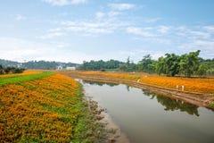重庆巴南开花世界庭院在盛开的湖边花 免版税库存图片