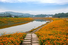 重庆巴南开花世界庭院在盛开的湖边花 免版税图库摄影
