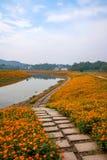 重庆巴南开花世界庭院在盛开的湖边花 图库摄影
