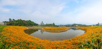 重庆巴南开花世界庭院在盛开的湖边花 库存图片