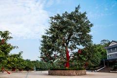 重庆巴南花和树在†‹â€ ‹世界庭院服务区域树 库存图片