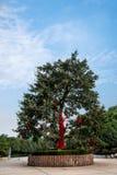 重庆巴南花和树在†‹â€ ‹世界庭院服务区域树 免版税库存照片