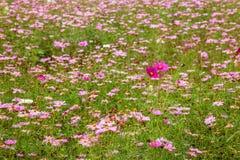 重庆巴南花和树在充分世界庭院里在盛开Gesang华的山 库存图片