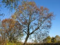 重新设置退色的叶子树和灌木 免版税库存照片