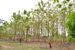 重新造林计划 免版税库存图片