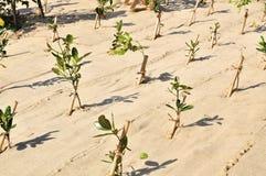 重新造林 免版税库存照片
