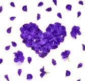 重点做的瓣上升了 在白色背景的蓝色玫瑰花瓣心脏 与拷贝空间的顶视图您的文本的 爱和浪漫 图库摄影