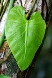 重点藤本植物雨 库存图片