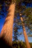 重点软的结构树 免版税库存图片