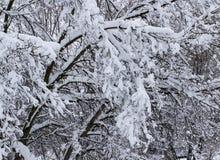 重的积雪的分支在春天在明尼苏达 免版税库存图片