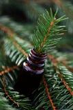 重要冷杉油结构树 库存图片