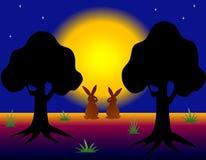 野兔在黑暗的夜森林里 库存图片