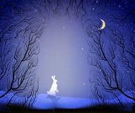 野兔用通往深神仙的冷淡的冬天森林的道路,冬天野兔在森林里, 免版税库存照片