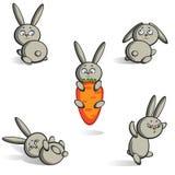 野兔设置了 免版税库存图片