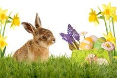年轻野兔,复活节兔子坐绿色草甸 图库摄影