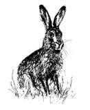 野兔 向量例证